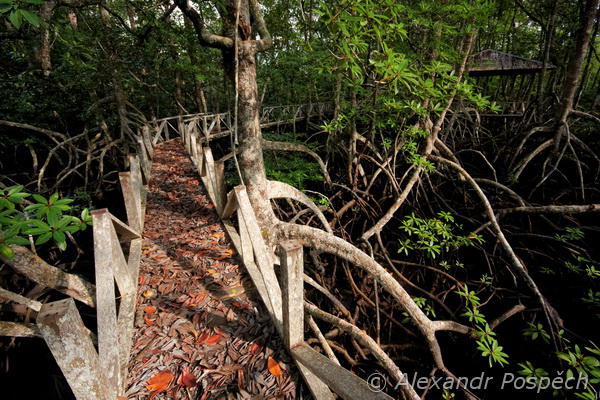 Bridge in mangroves